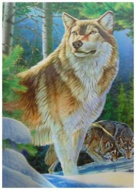 3D Poster Wölfe
