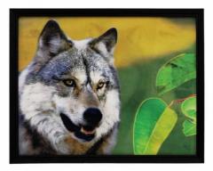 3D Bild Wolf