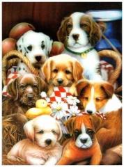 3D Poster Hundewelpen