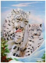 3D Poster White Baby Tigers