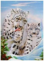 3D Poster Tiger Babys