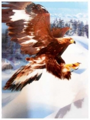 3D Poster Flying Eagle