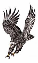 Temporäres Tattoo Adler
